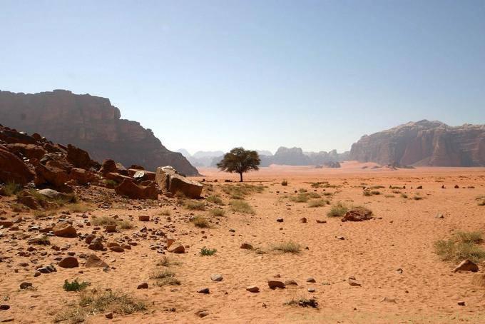 Wadi Rum 484