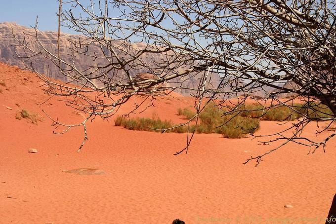 Wadi Rum 519