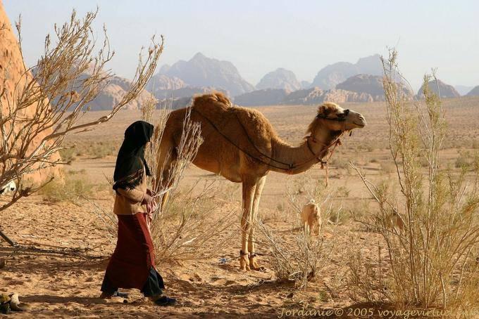 Wadi Rum 692