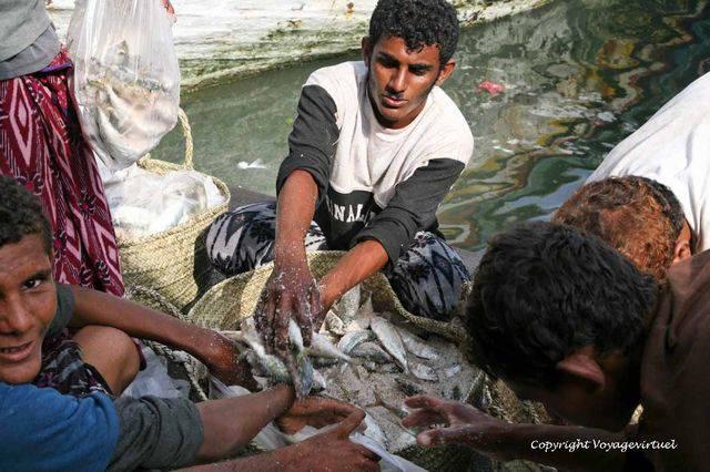 Tihama Al Hodeidah 3298