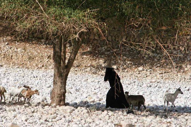 Wadi Do An 1137